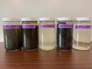 Plant process samples